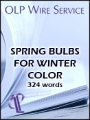 Spring Bulbs for Winter Color