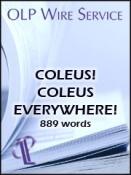 Coleus! Coleus Everywhere!